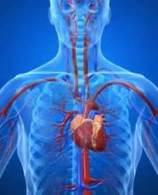 cardiovascular picture 1