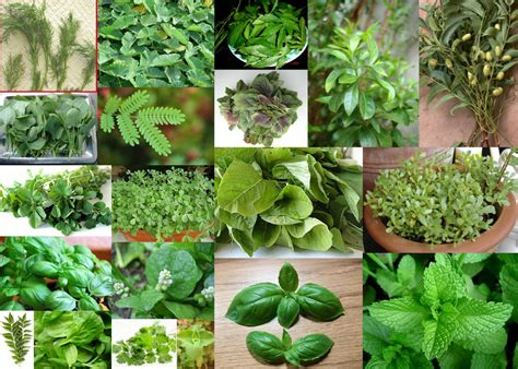 Best hot herbal herbs picture 14