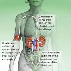 improve liver and kidney function picture 19
