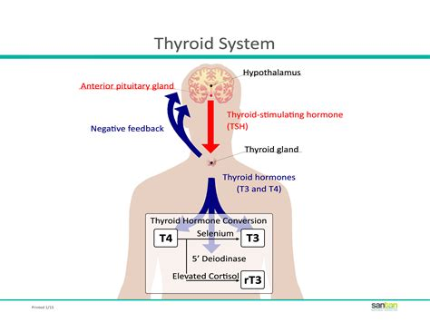 thyroid meds not being absorbed picture 5
