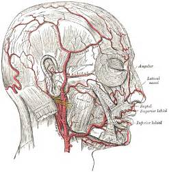 diagrams of nerve supply to thyroid gland picture 10