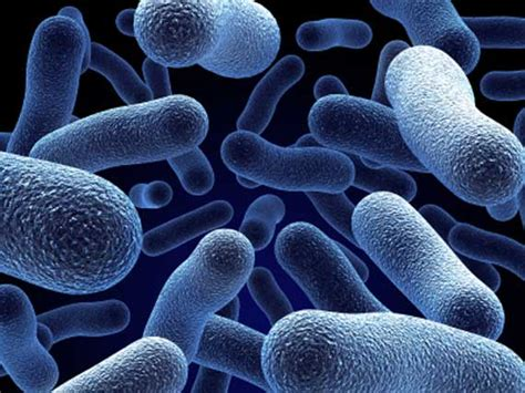 What are the effects of probiotics on bad picture 7