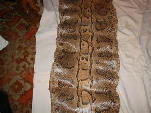 identifying snake skin types picture 2