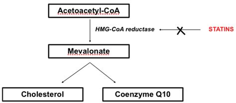 coq10 deficiency/statin drug picture 10