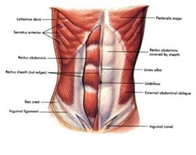 abdominal muscle pulls picture 21