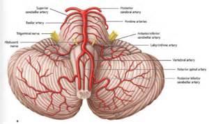 Fetal blood flow picture 3
