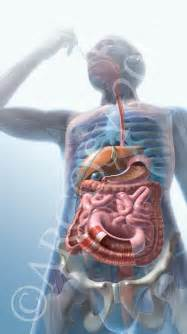 digestion animation picture 7