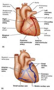 Vessel circulation picture 3