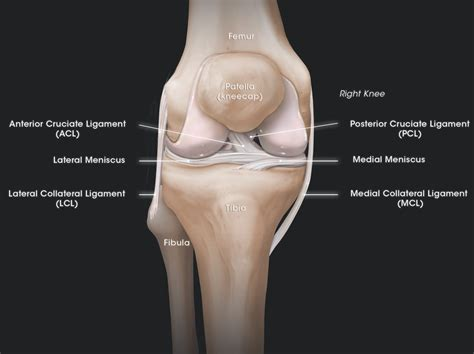 knee joint degeneration picture 1