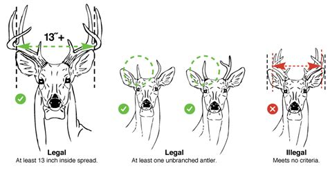 where to buy deer antlers in houston tx. picture 10