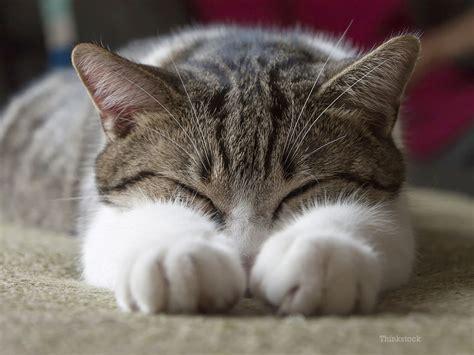 feline picture 11