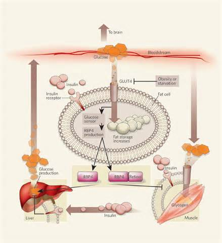 dissolve body fat from salt bile picture 7