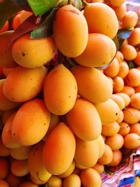 is garcenia cambodia a vitamin or fruit or picture 7