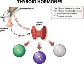 cause increased blood flow to thyroid picture 5