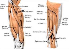 causes for joint and muscle pain picture 2
