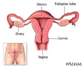 flygel pills how it works in womb picture 14