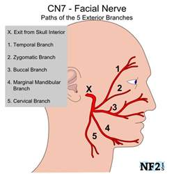how many nerve endings in lips picture 1