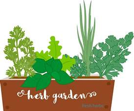 printable herbal clipart picture 9