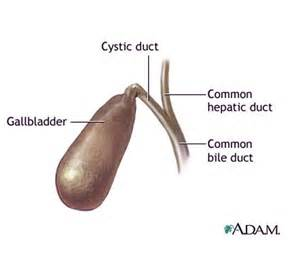 gall bladder attach picture 3