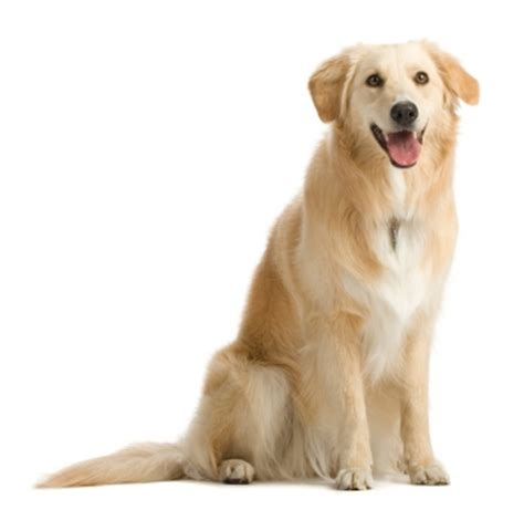 puppy bladder infection picture 3