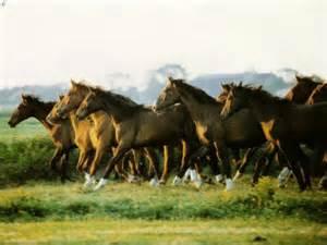 poze cu cai care fata picture 2