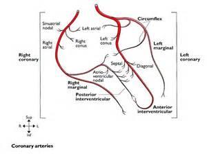 hemorrhoids sclerotherapy phenol coronary vasospasm picture 6