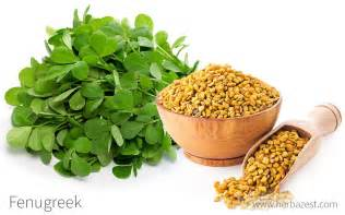 ancient herbals fenugreek picture 6