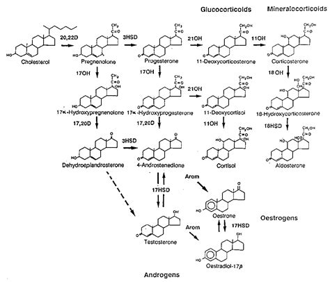 testosterone production cholesterol picture 1