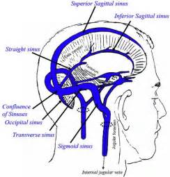 blood flow to the brain picture 7