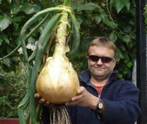 how to manage weight through onion picture 6