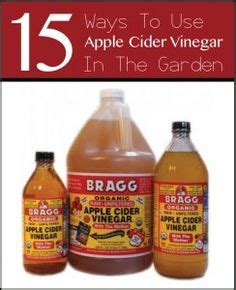 apple cider vinegar for cysis in cats picture 7