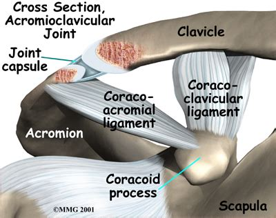 ac joint picture 15