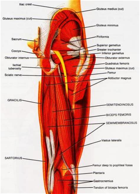 first degree muscle strain picture 7