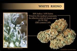 white rhino incense picture 9