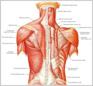 back muscle and tendon pain picture 15