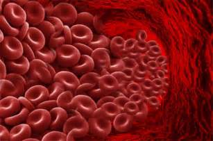 mataas na white blood cell picture 9