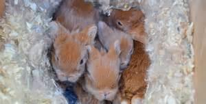 baby bunnies diet picture 6