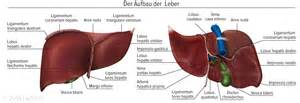 gall bladder function 2 picture 11
