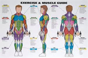 exercising muscle groups picture 18