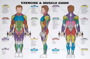 exercising muscle groups picture 3