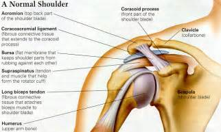 can large breast cause tendonitis in shoulder picture 1