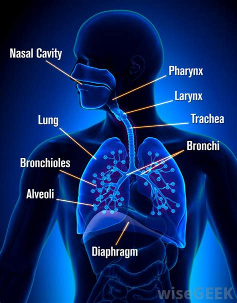 Cool...that will workbacterial lung infection picture 6