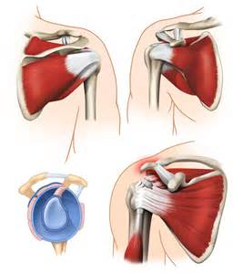 ac joint muscles picture 21