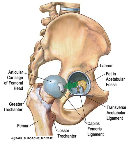 joint pain shoulder hips picture 5