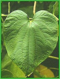 what herbs are good to treat discharge from picture 9