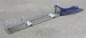 snake trap growth picture 9