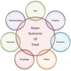 7 essential nutrients needed as part of a picture 1
