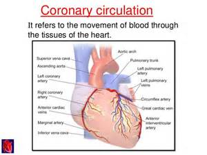blood flow through the heart picture 3