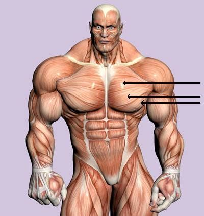 where to inject hgh in muscles picture 5