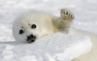 , seal pack hd bp picture 2